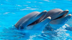 dolphin 300x167 - dolphin