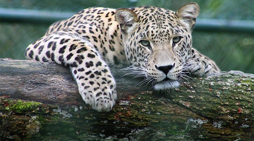 tiger - Jardim Zoológico – Um Ponto de Paragem em Lisboa